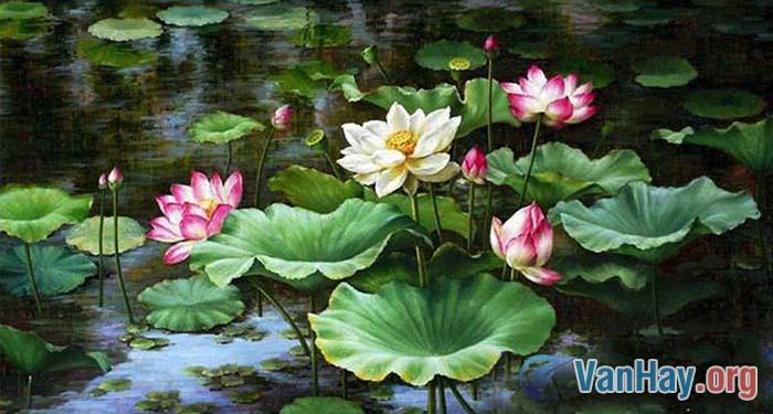 Bình giảng bài thơ Cảnh ngày hè của Nguyễn Trãi