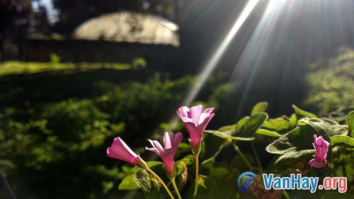 Bình giảng bài thơ Vội vàng của Xuân Diệu