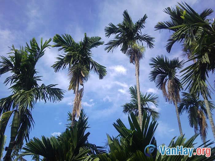 Bình giảng đoạn thơ sau đây trong bài Đây thôn Vĩ Dạ của Hàn Mặc Tử: Sao anh không về chơi thôn Vĩ? Nhìn nắng hàng cau nắng mới lên Vườn ai mướt quá xanh như ngọc Lá trúc che ngang mặt chữ điền