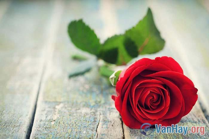 Suy nghĩ của anh (chị) từ ý nghĩa của câu chuyện: Hoa hồng tặng mẹ