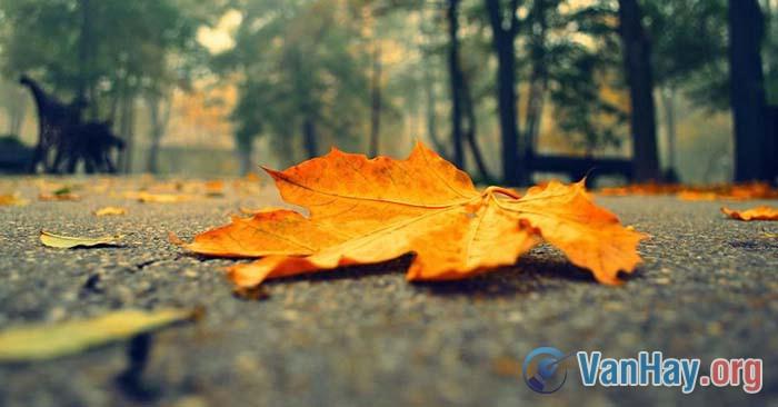 Lá rơi ở thềm nắng