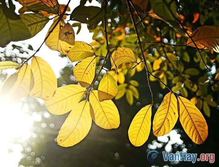 Bình giảng đoạn thơ sau trong bài Đất nước của Nguyễn Đình Thi: Sáng chớm lạnh trong lòng Hà Nội Những phố dài xao xác hơi may Người ra đi đầu không ngoảnh lại Sau lưng thềm nắng lá rơi đầy