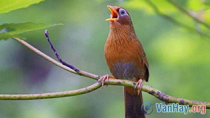 Hãy nói lên những suy nghĩ khi đọc đoạn thơ sau đây của Tố Hữu: Nếu là con chim, là chiếc lá/ Thì chim phải hót, chiếc lá phải xanh/ Lẽ nào vay mà không trả/ Sống là cho, đâu chỉ nhận riêng mình