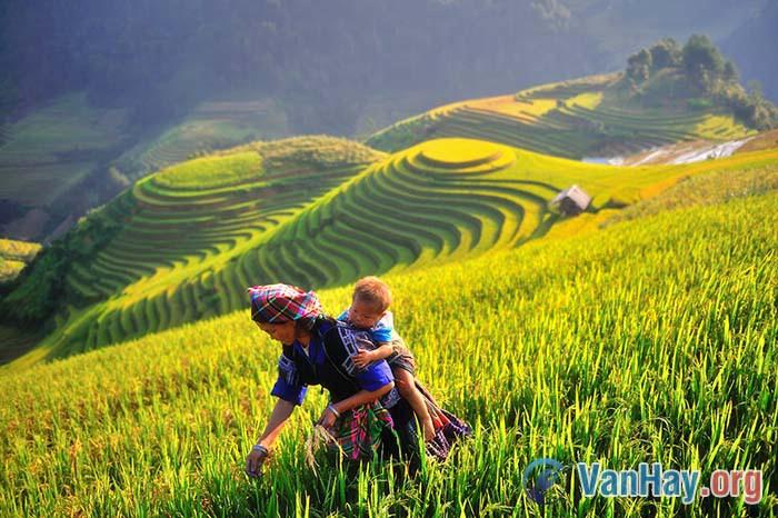 Bình giảng đoạn thơ sau trong bài Việt Bắc của Tố Hữu: Mình đi, có nhớ những ngày (...) Hắt hiu lau xám, đậm đà lòng son...