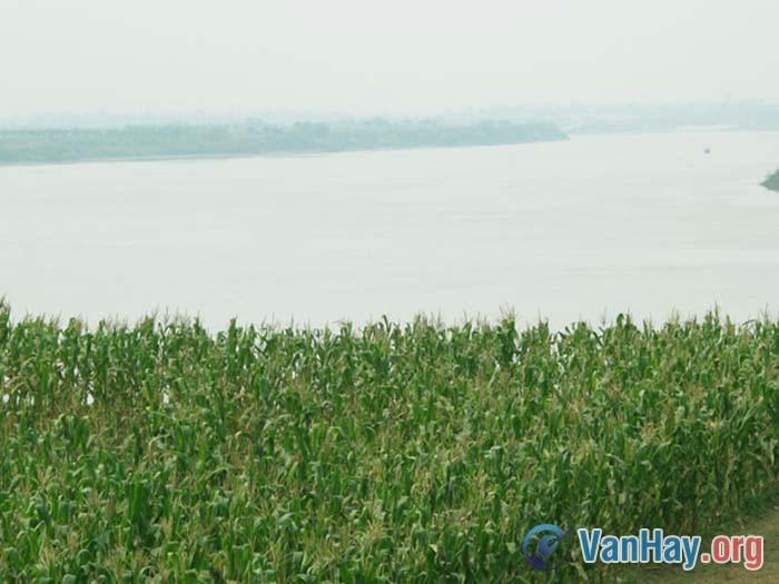 Phân tích bài thơ Bên kia sông Đuống của Hoàng Cầm