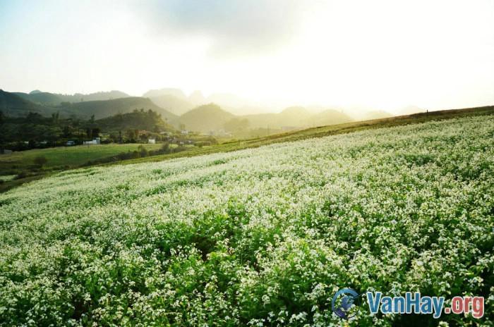 Bình giảng đoạn thơ trong bài Tây Tiến của Quang Dũng: Doanh trại bừng lên hội đuốc hoa (...) Trôi dòng nước lũ hoa đong đưa